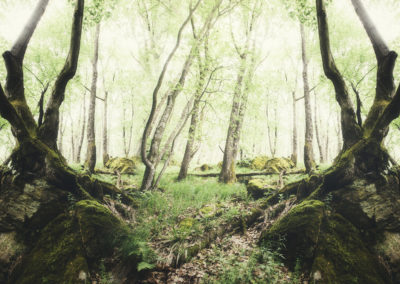 Creative symmetrical forest composition. Surreal green woods scenery with old trees