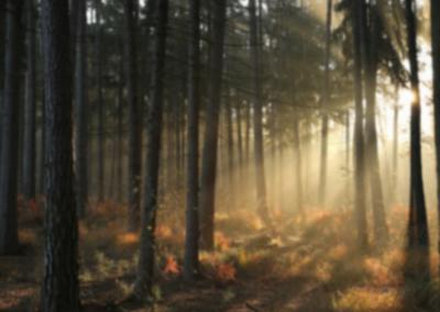 AdobeStock_202357991_blurred